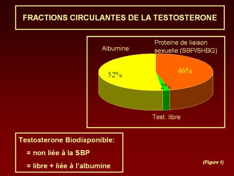 Comment mesurer sa testostérone ?