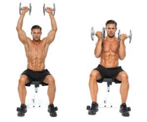 mouvements pour muscler le faisceau antérieur