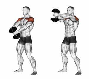 exercice de musculation pour développer le faisceau antérieur