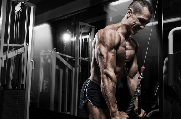 programme pour muscler les bras